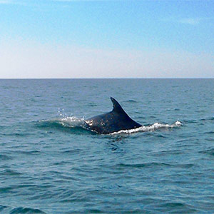 Dolphin Bay Essence